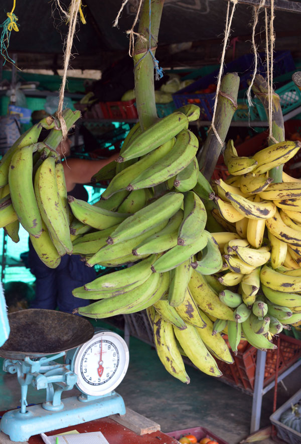Plantain in Antioquia, Colombia