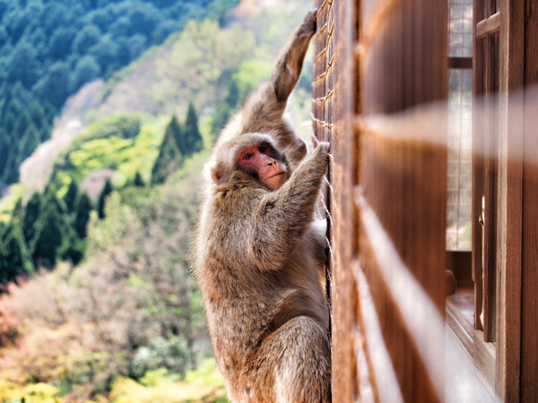 kyoto-kids-monkey-park-3