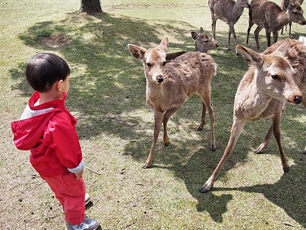 kyoto-kids-nara-deer-park