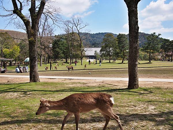 kyoto-kids-nara-derk-park-2