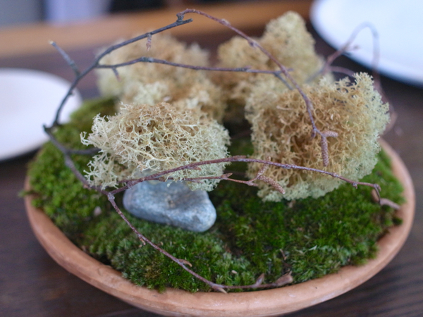 dehydrated reindeer moss