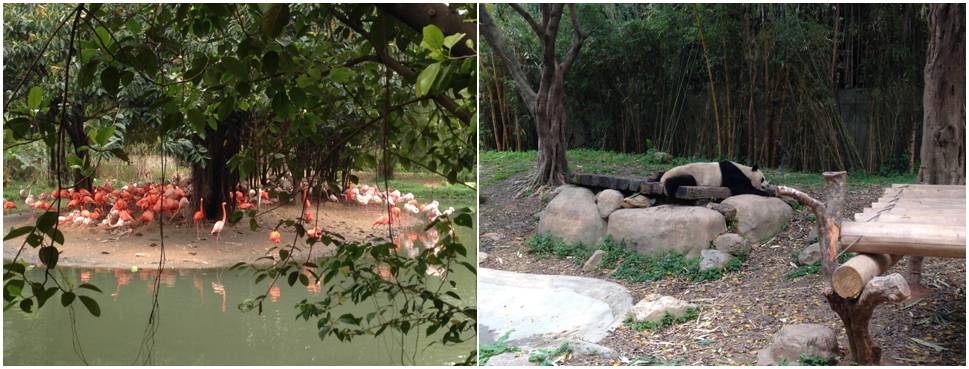flamingos and panda